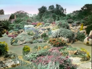 The rock garden at Royal Botanic Garden Edinburgh