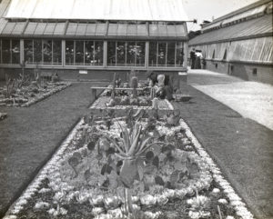 Cacti Beds at Royal Botanic Gardens, Kew