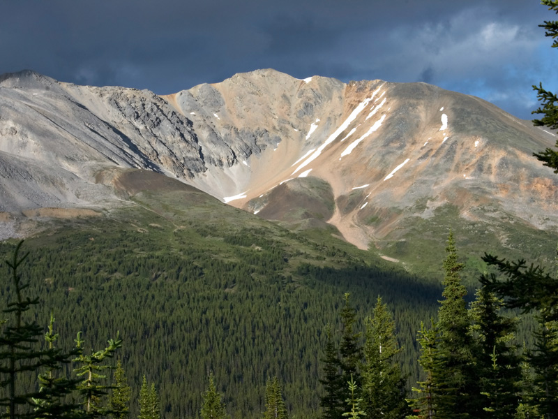Tree-line in Banff National Park