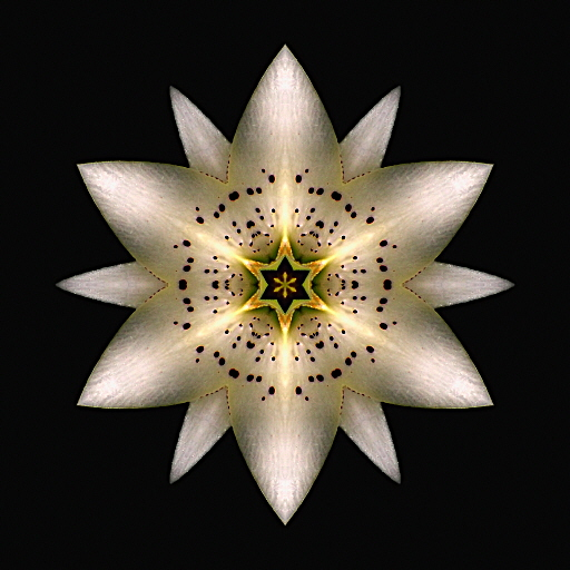Flower Mandalas Project - White Lily I-a