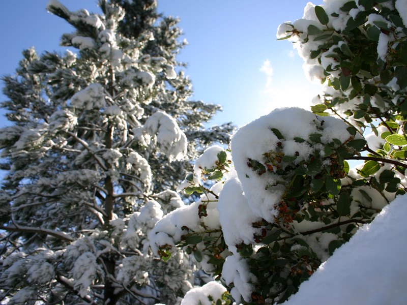 Snow on plants near Santa Barbara, California