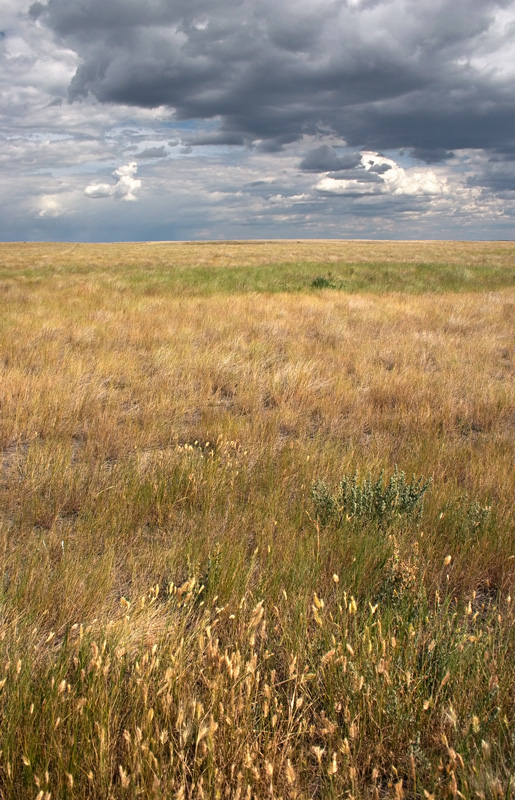 Canada's Grasslands National Park
