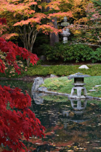 Autumn colour in Nitobe Memorial Garden