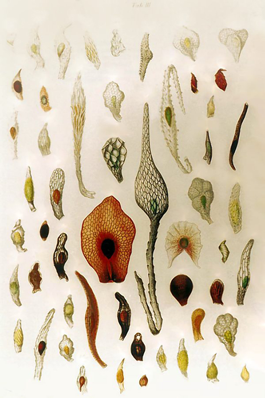 An illustration of orchid seeds