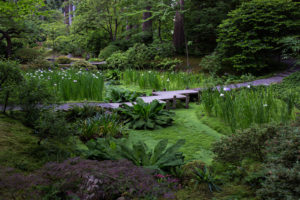 Irises in bloom in Nitobe Memorial Garden
