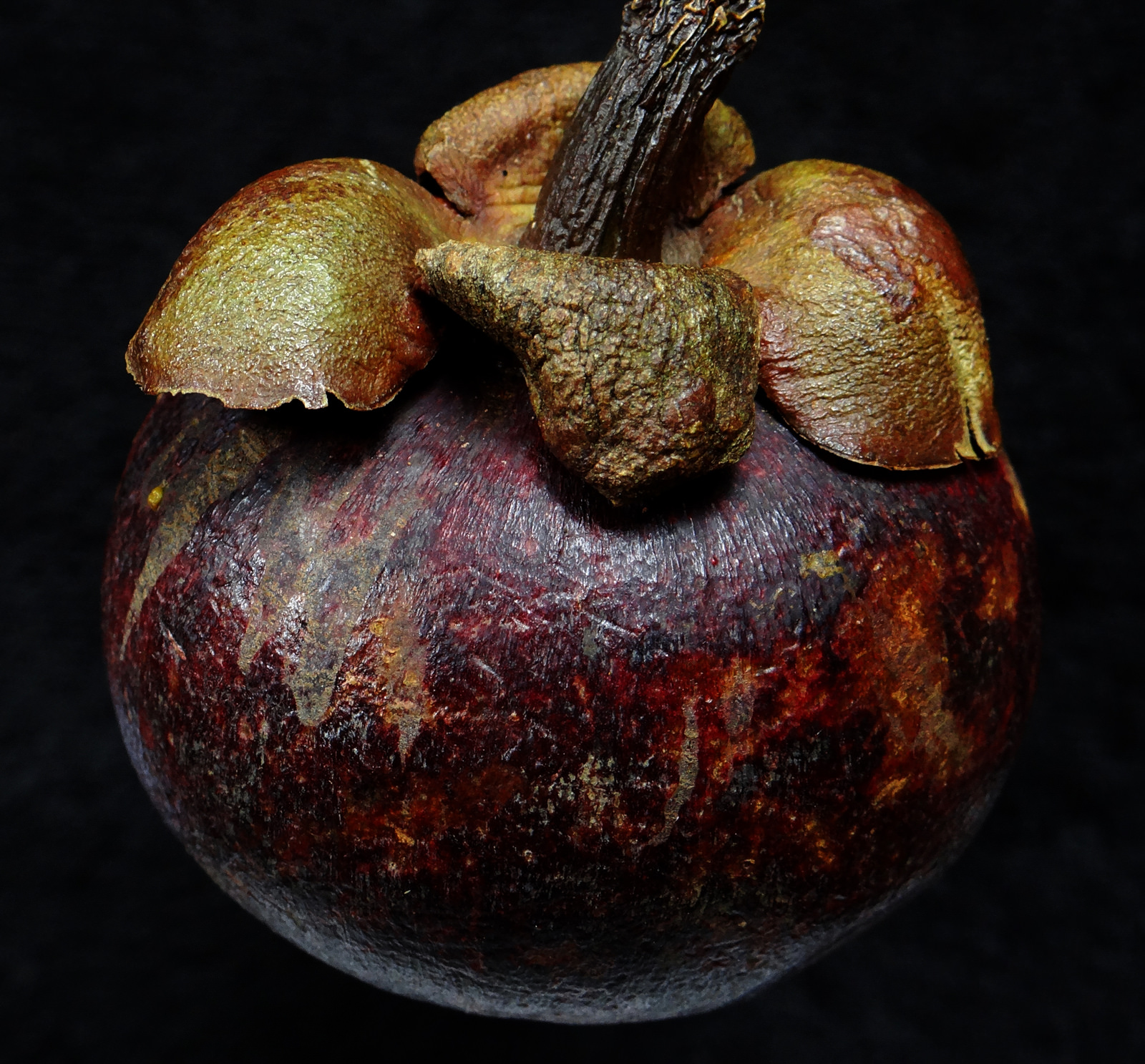The fruit of Garcinia mangostana