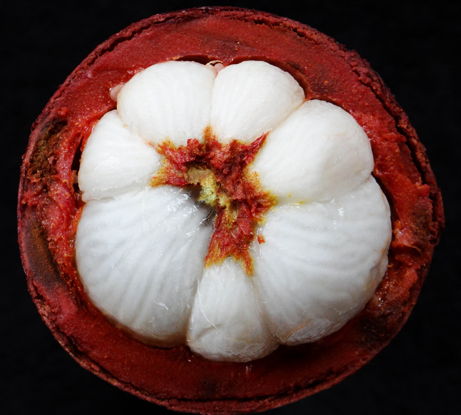 Interior of the fruit of Garcinia mangostana