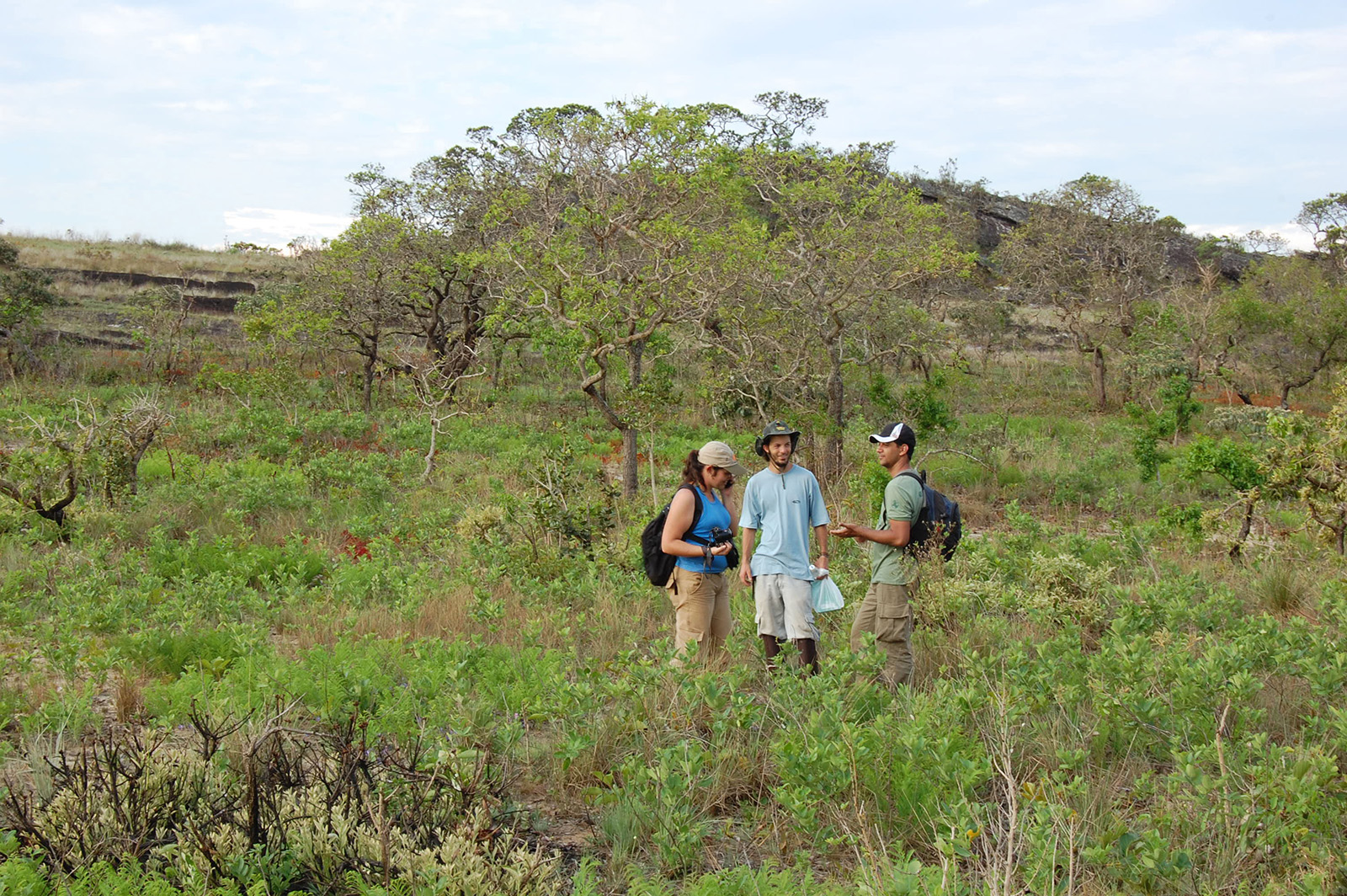 Researchers associated with Dr. Ruy J. V. Alves, standing among the foliage